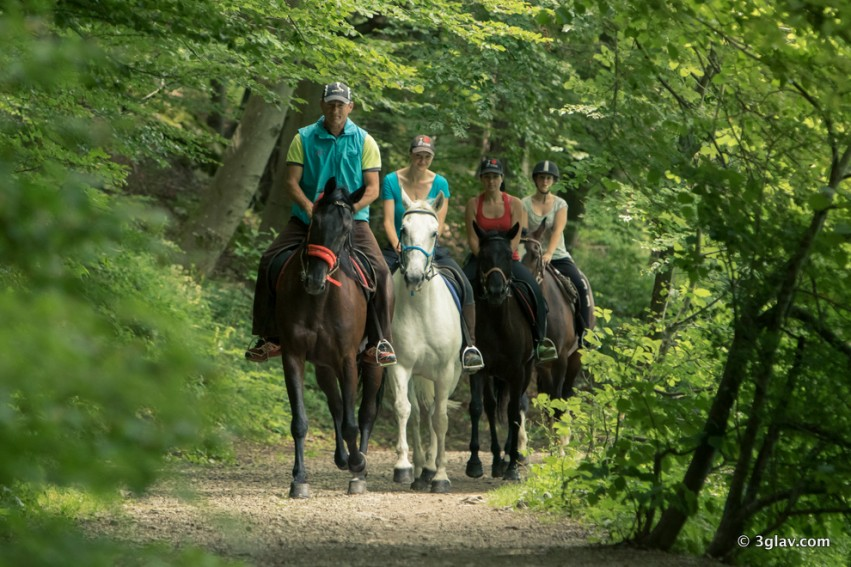 Horse riding country trip Slovenia Bled
